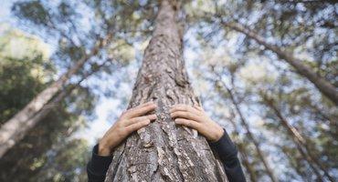 SME Standards:Carbon Footprint